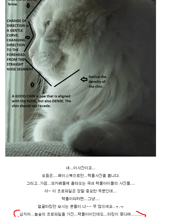 viewimage.php?id=2ebcc4&no=24b0d769e1d32ca73fec87fa11d0283168a8dd5d0373ee31e5f33784e6238772b23ad4fb71c49903018cbe203114780352e28548b0727fc664b3482ca5683f65d37a3f06dc4a3fe73185d342c5de37c664f1f80e57c579b26011ceaf4cfa
