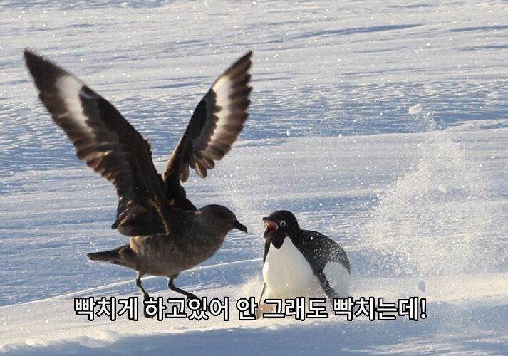 viewimage.php?id=39b2c9&no=24b0d769e1d32ca73dec8efa11d02831b210072811d995369f4ff09c9fd84d849f0fc2105392b699a66ecad85b532176a45194ce2bbc11dcd5ced06d23fbaa87d0c1c7bae8fd28bbe9e7c57e60de562469fead