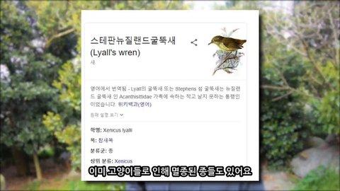 viewimage.php?id=3eb4de21e9d73ab360b8dab04785736f&no=24b0d769e1d32ca73dec81fa11d028314d3faebecfec25ed6aa778bc7857f309cb6cba76475f389b19c2b231414b9ee8769af8d9b76df1f7f5de5fc235da5b3db2162c9a300a69c4c300f653da25b8c339cafca979e3798684eb40c0e03eb91759a4cc670bce92430dfda01fe4c4c5a4380abcda5338d3b5e1d8