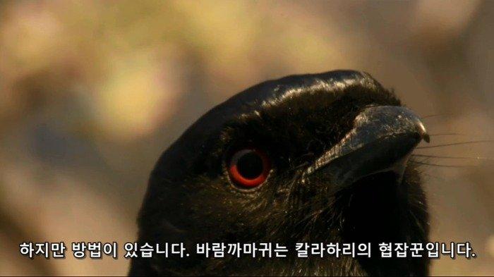 viewimage.php?id=3eb4de21e9d73ab360b8dab04785736f&no=24b0d769e1d32ca73dec8efa11d02831b210072811d995369f4ff09c9cd04d83c858a4efb39c4c89da5af303bd5ef1d27d3b459ae5b8cdbba54f560334c77754aa860af98e9ee77ef1ffeb324cfd28a701ab0d414f303355718ed270b067b31bfb94703792be4732