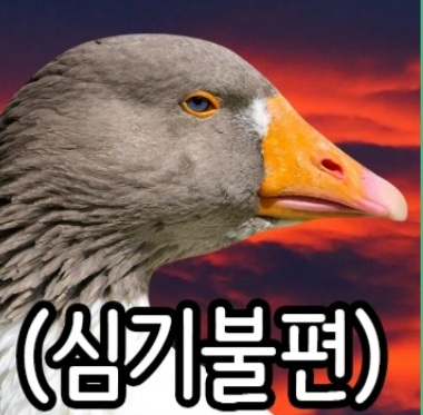viewimage.php?no=24b0d769e1d32ca73feb87fa11d0283175f95a5bb5a9434fdc24c2adb2494bd8d44b2808ffab9a68a6f2fb0f98a35fdecad43804a5c99fbcc33507ada609349566dca21f71e3c0cb37e51b0a63a5360b3092c4db4956d1e9eed2abd2cdc8542f7330