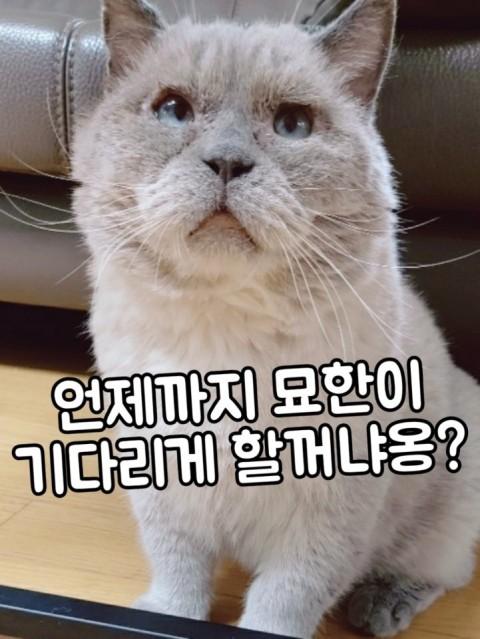 viewimage.php?no=24b0d769e1d32ca73fec87fa11d0283168a8dd5d0373ee31e5f23e84e6228772cf4a495f4a4a5c2dee7467a6accbad6a71bd0dc1f10a0fbec8339746b036e66d736ef75ebd3f6e02fd13c298f56449621388c3413def3fadbafec2c387cc14f6